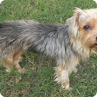 Adopt A Pet :: Gooffy - Umatilla, FL