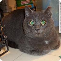 Adopt A Pet :: AugieCP - Carlisle, PA