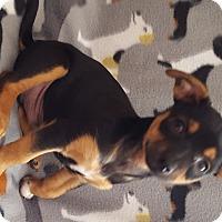 Adopt A Pet :: Snoopy - Toms River, NJ