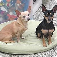 Adopt A Pet :: Mamasita and Bandita - Cranston, RI