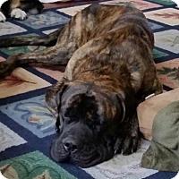 Adopt A Pet :: Sebastian - Adoption Pending - Edmond, OK