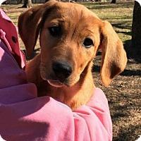 Adopt A Pet :: Rebecca - Aurora, CO