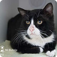 Adopt A Pet :: Mr. Bubble - Merrifield, VA