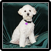 Adopt A Pet :: Tommy - San Dimas, CA