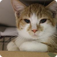 Adopt A Pet :: Dewey - Medina, OH