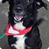 Adopt A Pet :: Hanson - Fairfax Station, VA