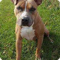 Adopt A Pet :: Joon - Lafayette, NJ