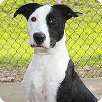 Adopt A Pet :: PAYTON - Tallahassee, FL