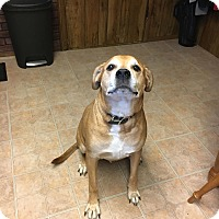 Adopt A Pet :: Prince  *** Courtesy Post*** - Orwigsburg, PA