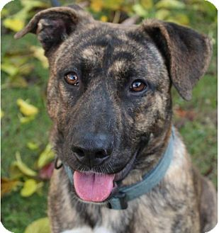 Mountain Cur Mix Dog for adoption in Red Bluff, California - ABRAHAM