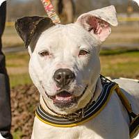 Adopt A Pet :: Esther - Greenwood, SC