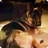 Adopt A Pet :: KRATOS-16 adoption pending - Lithia, FL