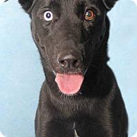 Adopt A Pet :: Hi-Top - Encinitas, CA