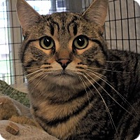 Adopt A Pet :: Rollie - Grants Pass, OR