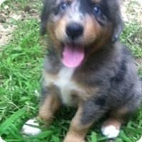 Adopt A Pet :: Red - Lexington, TN