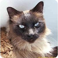 Adopt A Pet :: Mikey - Davis, CA