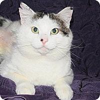 Adopt A Pet :: Ringo - Kalispell, MT