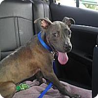 Adopt A Pet :: Durango - Orlando, FL