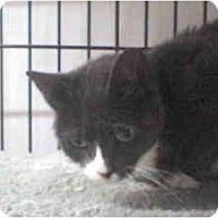 Adopt A Pet :: Serena - Island Park, NY