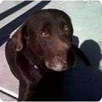 Adopt A Pet :: COCO - La Mesa, CA