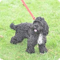 Adopt A Pet :: Jackson - Tumwater, WA