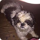 Adopt A Pet :: Spirit