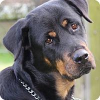 Adopt A Pet :: Chloe - Alachua, GA
