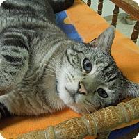 Adopt A Pet :: Frankie - Medina, OH