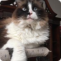 Adopt A Pet :: Isabel - Davis, CA