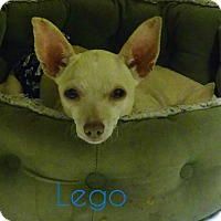 Adopt A Pet :: Lego (5 pounds) - House Springs, MO