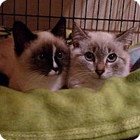 Adopt A Pet :: Channel - Barnegat, NJ