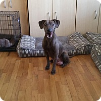 Adopt A Pet :: Teagan - Alpharetta, GA