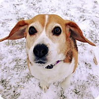 Adopt A Pet :: Chloe - Johnstown, PA