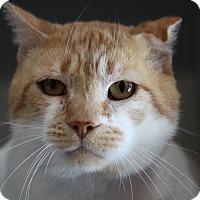 Adopt A Pet :: Meatball - Sarasota, FL