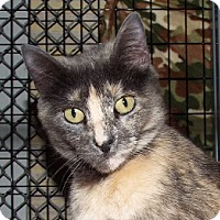Adopt A Pet :: Kalua - Grants Pass, OR