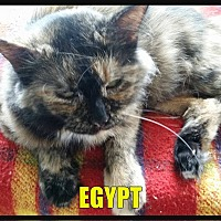 Adopt A Pet :: Egypt - MADISON, OH