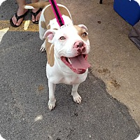 Adopt A Pet :: Lucy - Elderton, PA