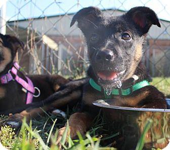 Border Collie/Border Terrier Mix Dog for adoption in Mocksville, North Carolina - Danny