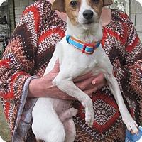 Adopt A Pet :: Pogo - House Springs, MO
