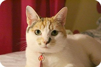 Domestic Shorthair Cat for adoption in Whittier, California - Moonflower