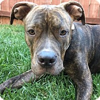 Adopt A Pet :: Maya - Huntington Beach, CA