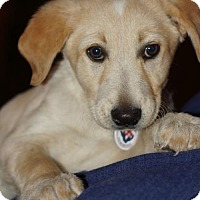 Adopt A Pet :: Reynolds - Holly Springs, NC