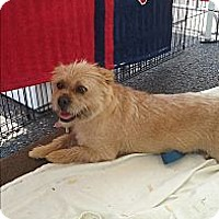 Adopt A Pet :: Whitney- Bonded to Stevie - Northeast, OH