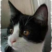 Adopt A Pet :: 23 - Pueblo West, CO