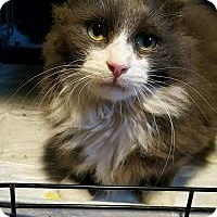 Adopt A Pet :: Fluffy - East Brunswick, NJ