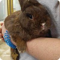 Adopt A Pet :: Chubbs - Titusville, FL