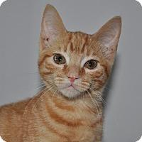 Adopt A Pet :: Nora - La Canada Flintridge, CA