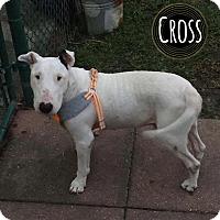 Adopt A Pet :: Cross - Lake Worth, FL