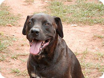 Napoleon | Adopted Dog | hartford, CT | Labrador Retriever Mix