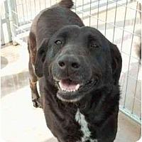 Adopt A Pet :: Pepper - Floresville, TX